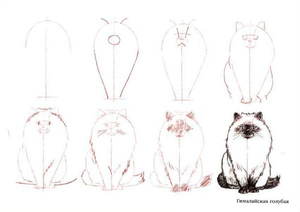 рисуем гималайскую кошку