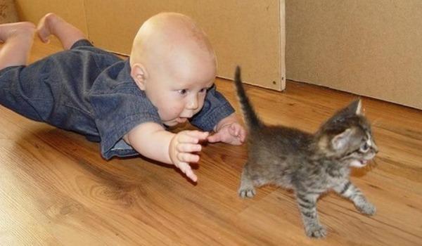 дети бегают за котенком