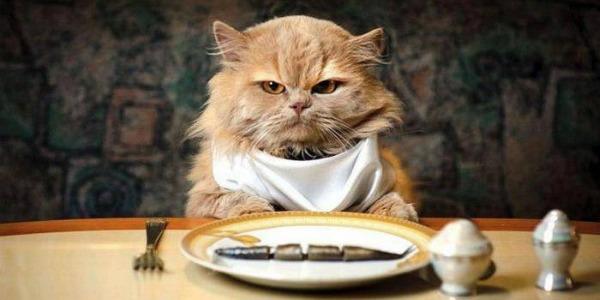 котенок не хочет рыбу
