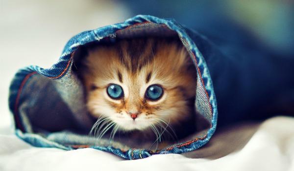 забота о котенке