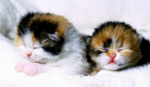 Слепые котята