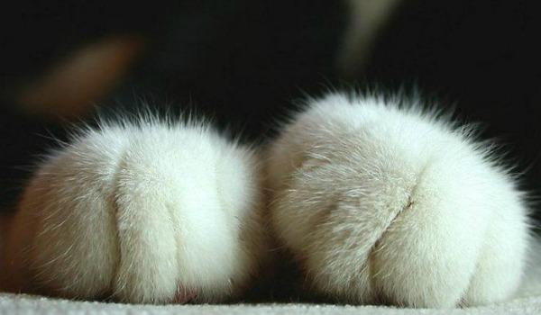котенок перебирает лапками