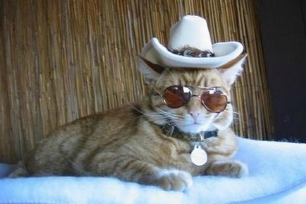 котенок ковбой