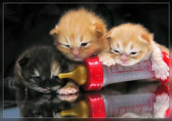 котенок пьет воду из соски