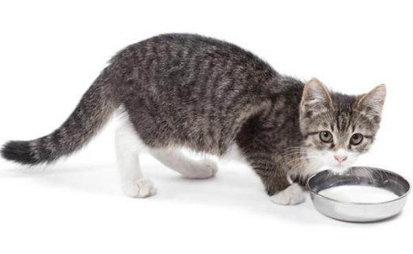 котенок кушает