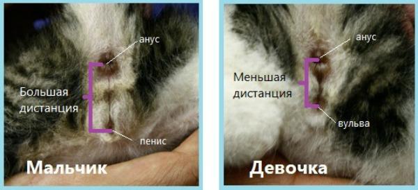 кто это кот или кошечка