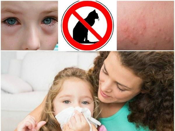 аллергия у ребенка на шерсть