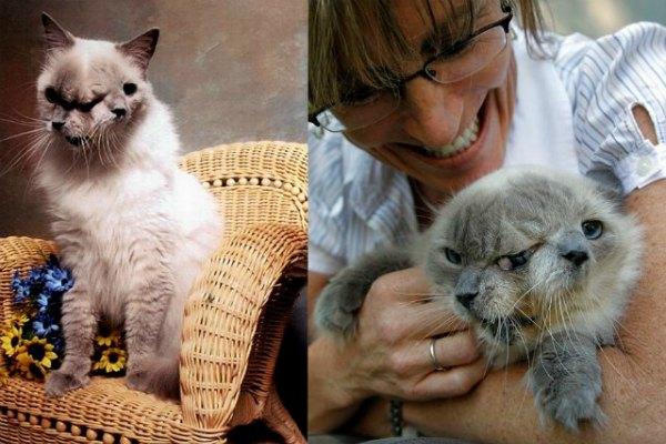 Четырнадцатилетний кот Фрэнк-Луи