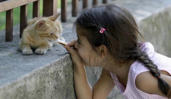 отношение с котенком
