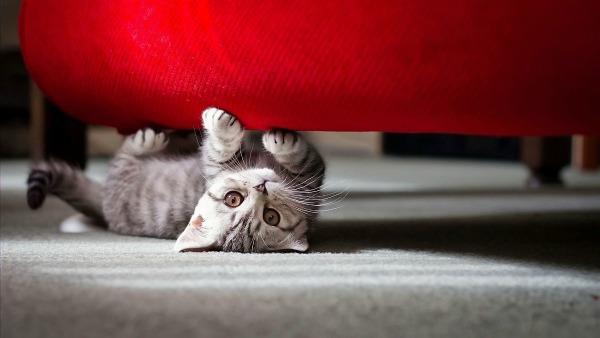 котёнок дерёт диван