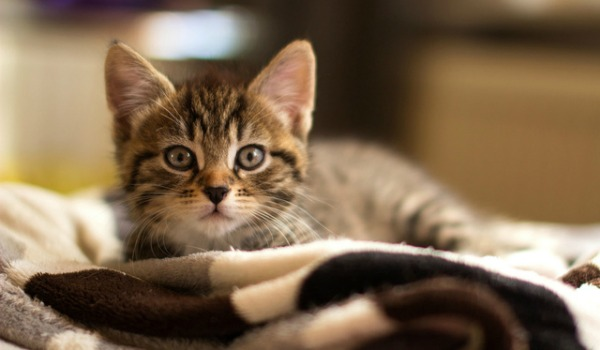 воспитываем котенка ругая его