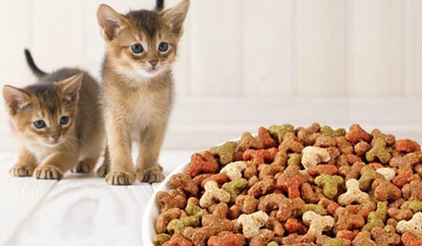 котенок ест корм