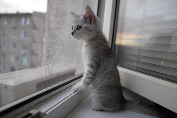 котенок на москитной сетке