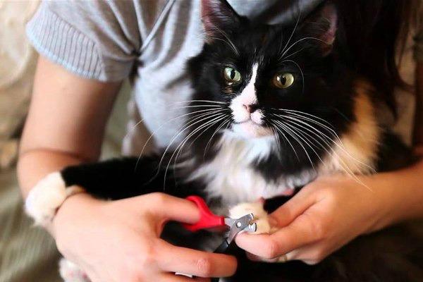 подстрижка когтей коту