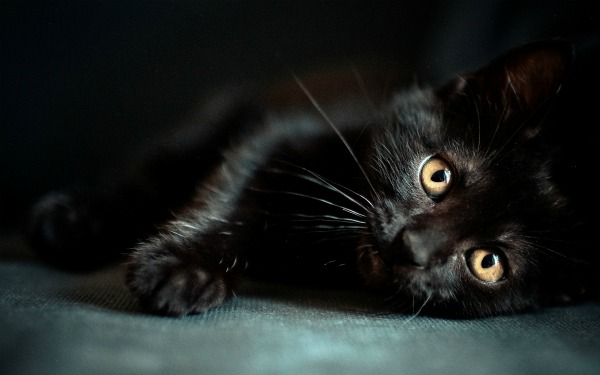 черный котенок мальчик