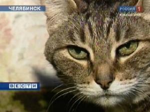старый кот Прохор из россии