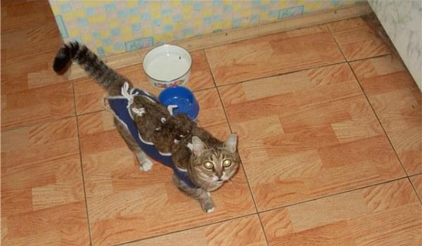 котенок после кастрации ест