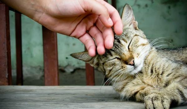 поглаживание кота
