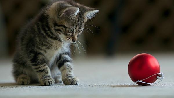 котенок играется с игрушкой