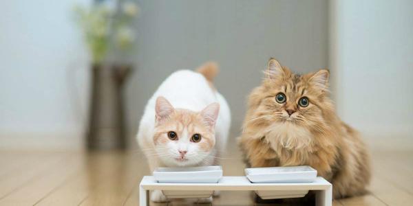 обед у котов