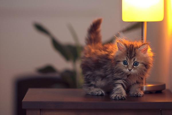 популярные имена для кошек девочек