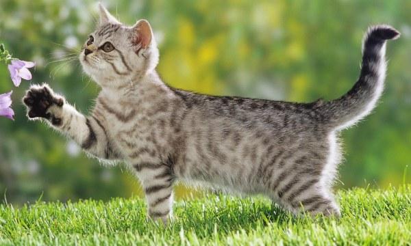 котенок отзывается на кс-кс-кс