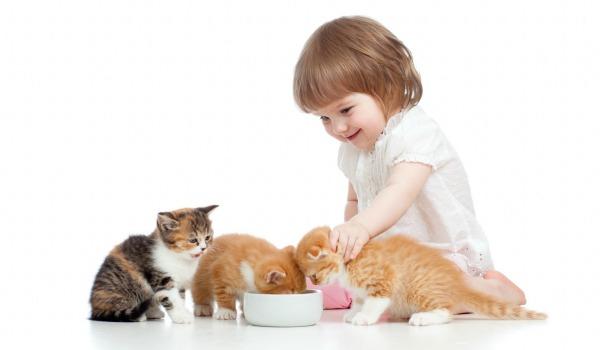котенок с ребенком