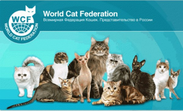 организация WCF