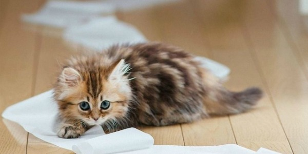 ручной котенок