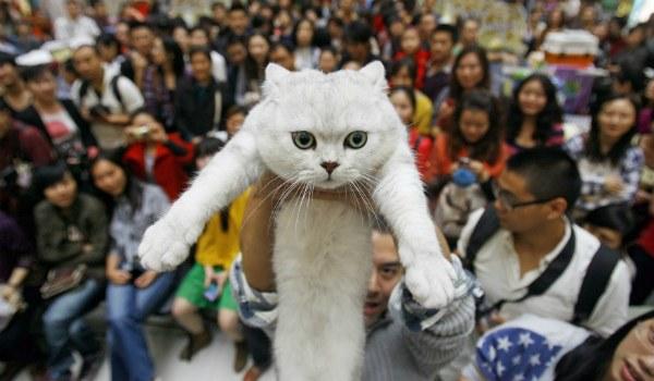 кошка на выставке