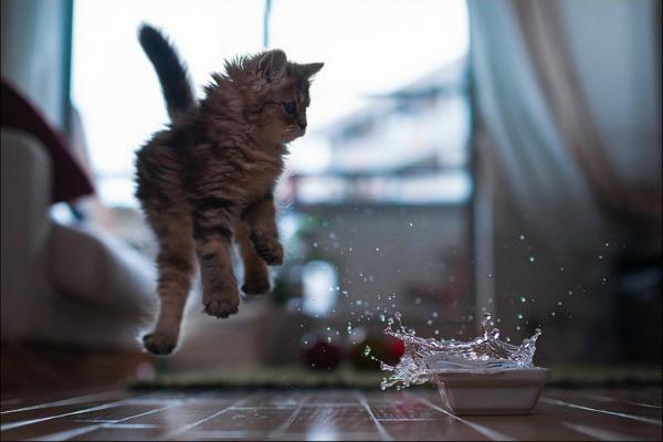 котенок без воды