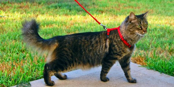 прогулка котенка с ошейником