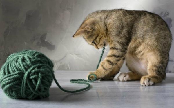 Развитие котенка по месяцам и неделям