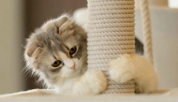 показываем котенку когтеточку