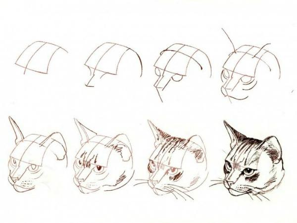 как нарисовать голову кошке