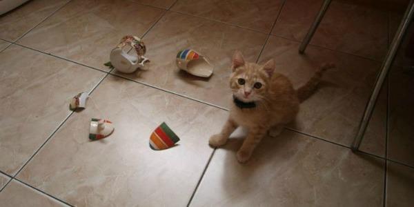 котенок разбил кружку