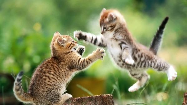 2 котенка