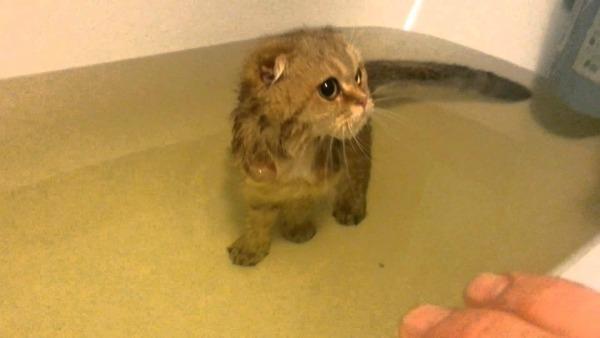 кот купается