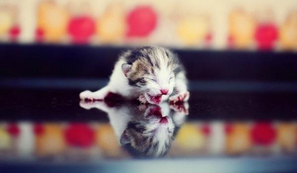 слепой новорожденный котенок