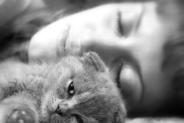 спим с котенком