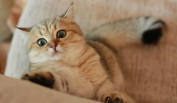 кот обдирает мебель