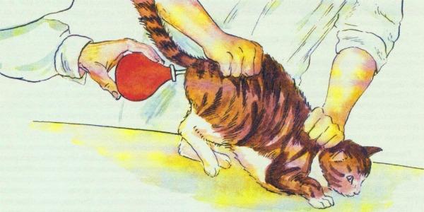 клизма котенку