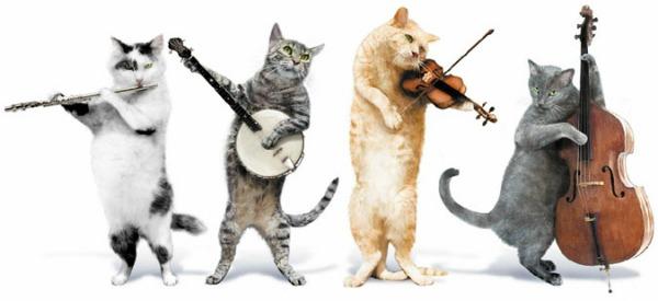 отмечаем день кошек
