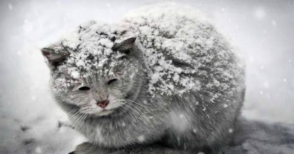 кот на улице зимой