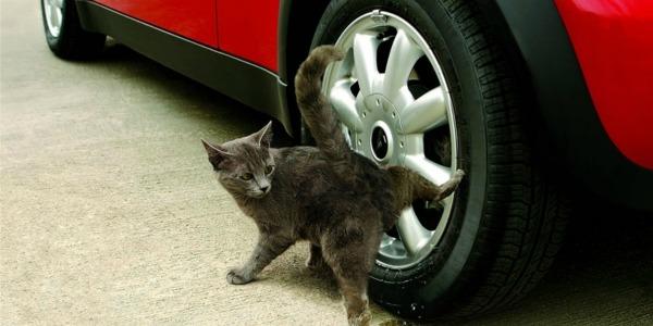 кот метит обсцыкает территорию