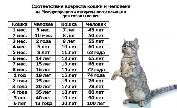 соотношение возраста человека и кошки