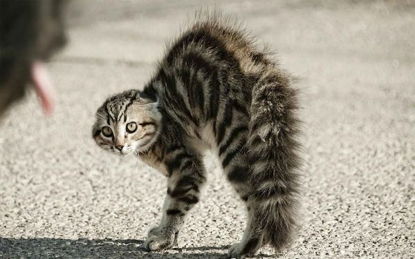 кот на улице в панике