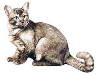 азиатская дымчатая кошка