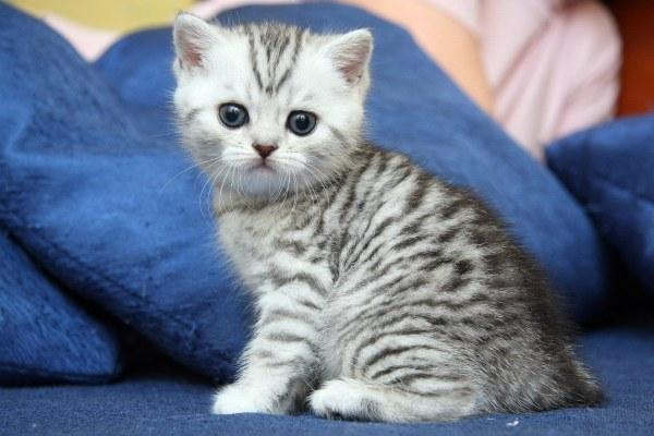 называем котенка прикольно