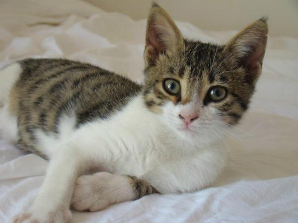CAT_1[1]